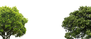 Green Treetops